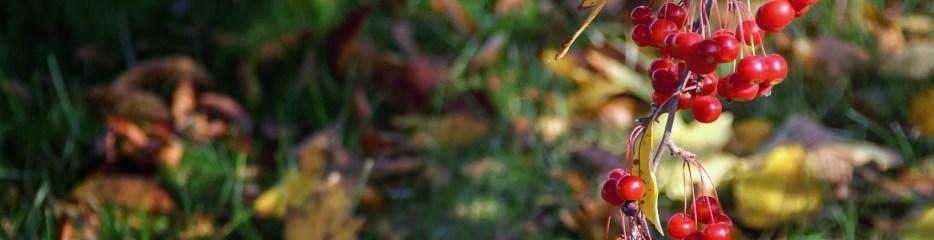 Single Frame: Autumn Close Up #11