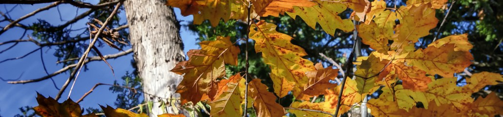 Single Frame: Autumn Close Up #12