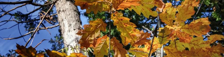 Single Frame: Autumn Close Up #12