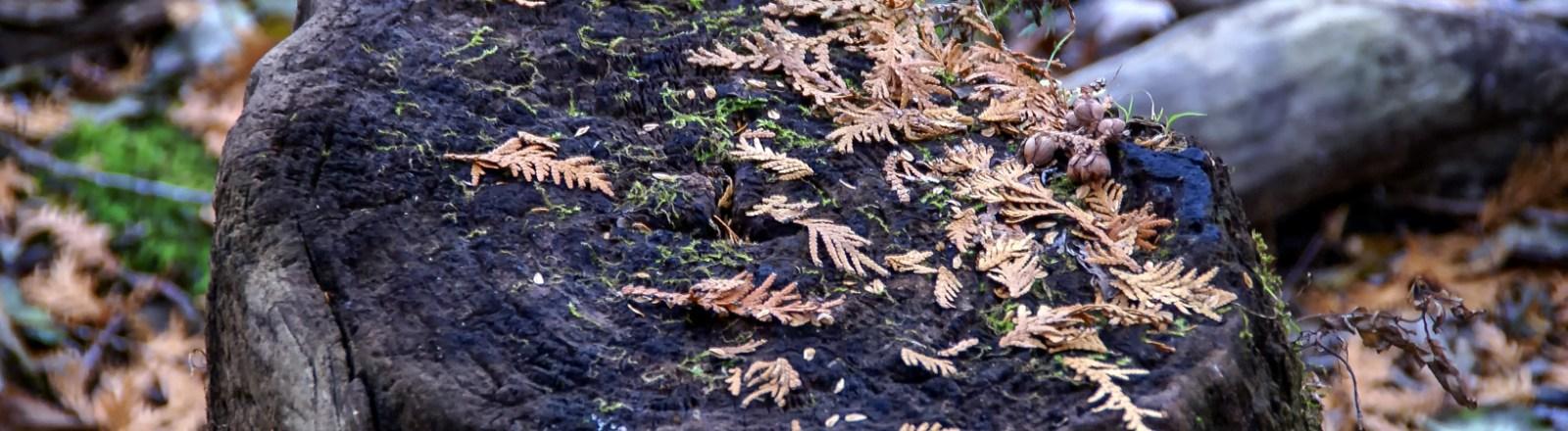 Single Frame: Autumn Close Up #15