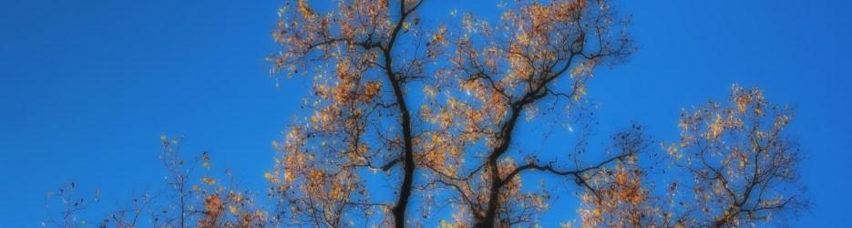 Wordless Wednesday:  Sparkling Autumn (Six Variations)