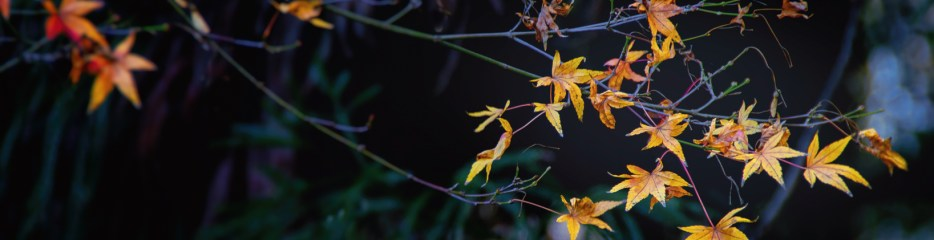 Wordless Wednesday: Fall, Fading
