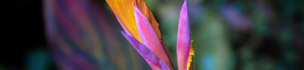Found Flowers (Set 3 of 3): Captivating Canna