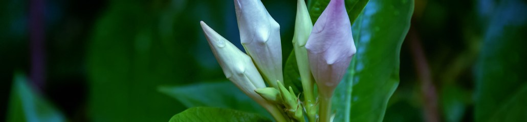 Found Flowers (Set 1 of 3): Marvelous Mandevilla