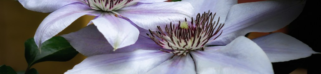 Before and After: Bernadine Clematis, An Illusion
