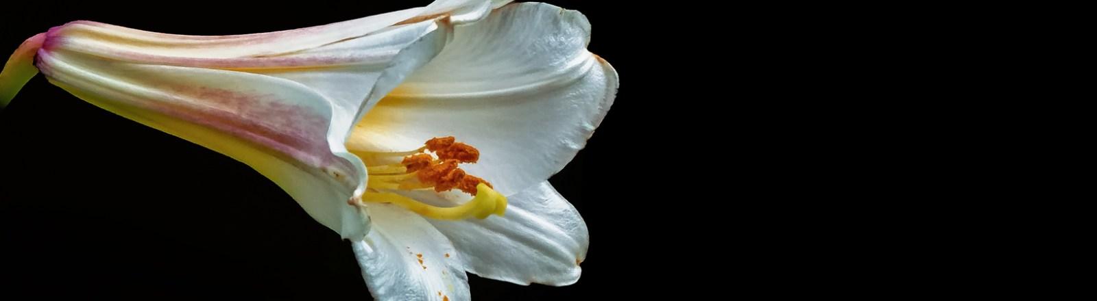 Summer 2020: Lily Variations (8 of 10)