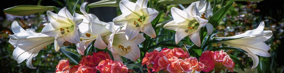 Easter Sunday 2021: Yellow Daffodils and White Lilies