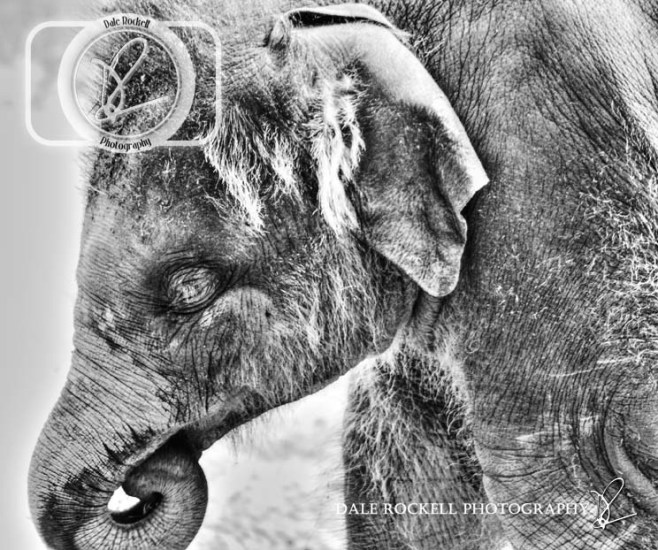 ZSL Whipsnade_IMG_7018_29-06-14_HDR_B&W