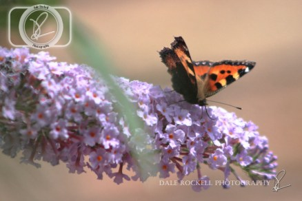 Butterfly_28-07-14_IMG_7995