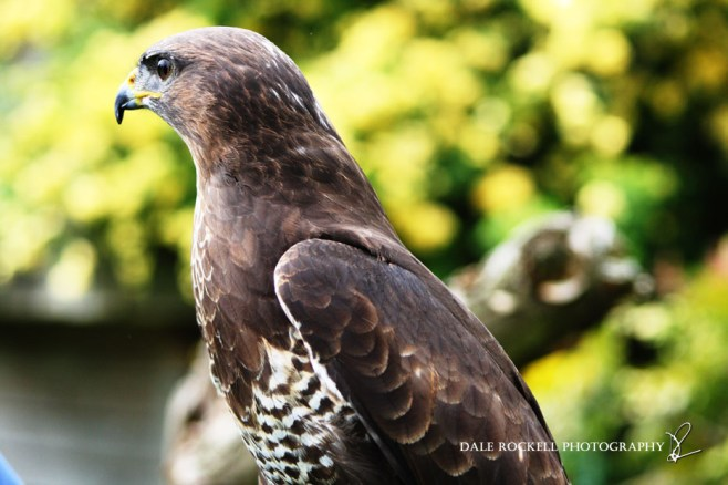 Feathers & Fur_24-05-15_IMG_4455