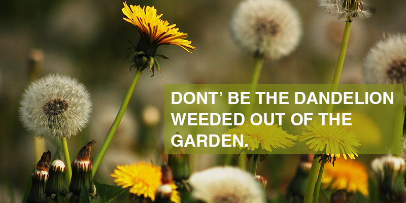 don't be the dandelion weeded out of the garden