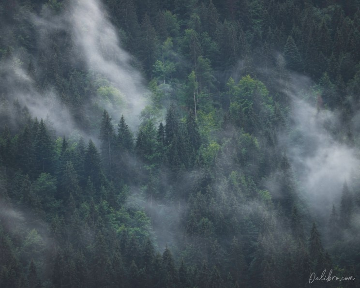 Mist rolling through a deep forest on the opposite side of the valley at Geroldsee