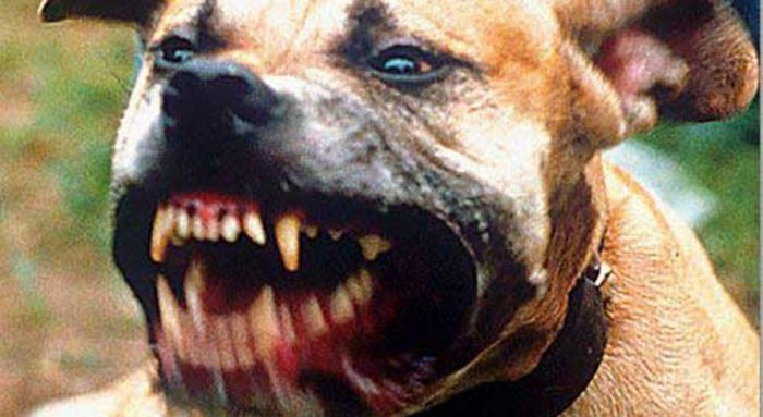 Dallas Dog Bite Lawyer