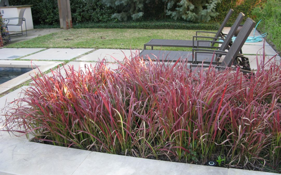 Japanese Bloodgrass David Rolston Landscape Architects Residential Amp Commercial Landscaping