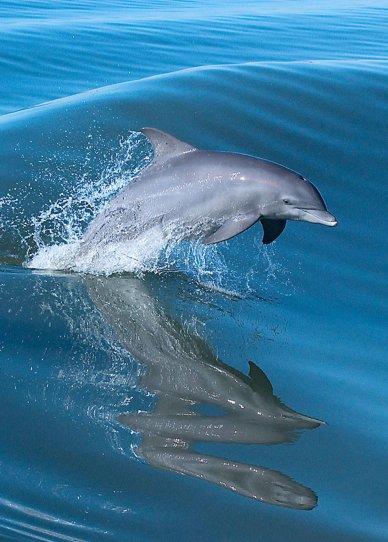 0618-Dolphins-1600x0-c-default