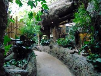 Tropical-Rainforest-Path-Dallas-World-Aquarium-2
