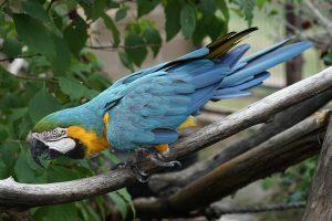 macaw-thumb-300x200