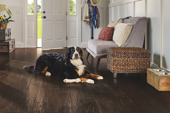 pet-friendly-flooring-paragon-SAKP59L403H