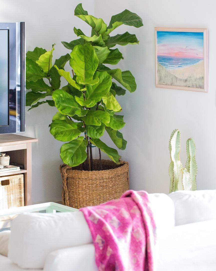 Our Top 10 Picks for Modern, Indoor Houseplants   Dalla Vita