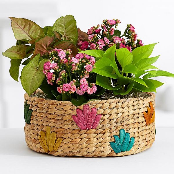 HousePlant Basket