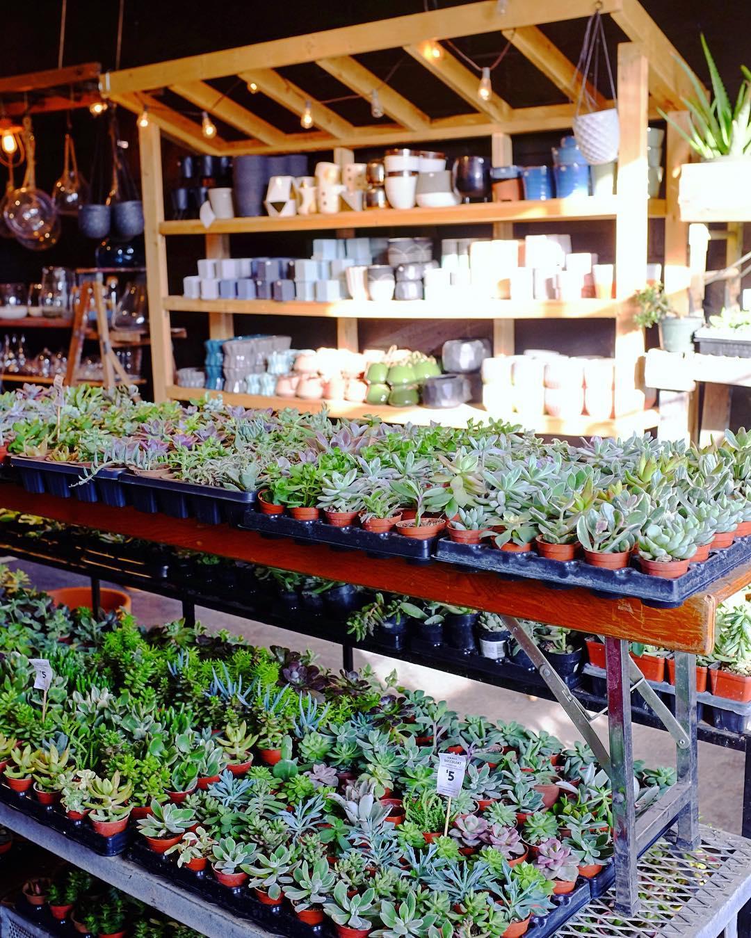 Plant Shop YYC Canada