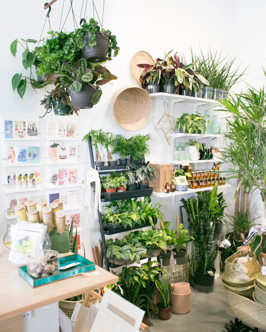 The Zen Succulent