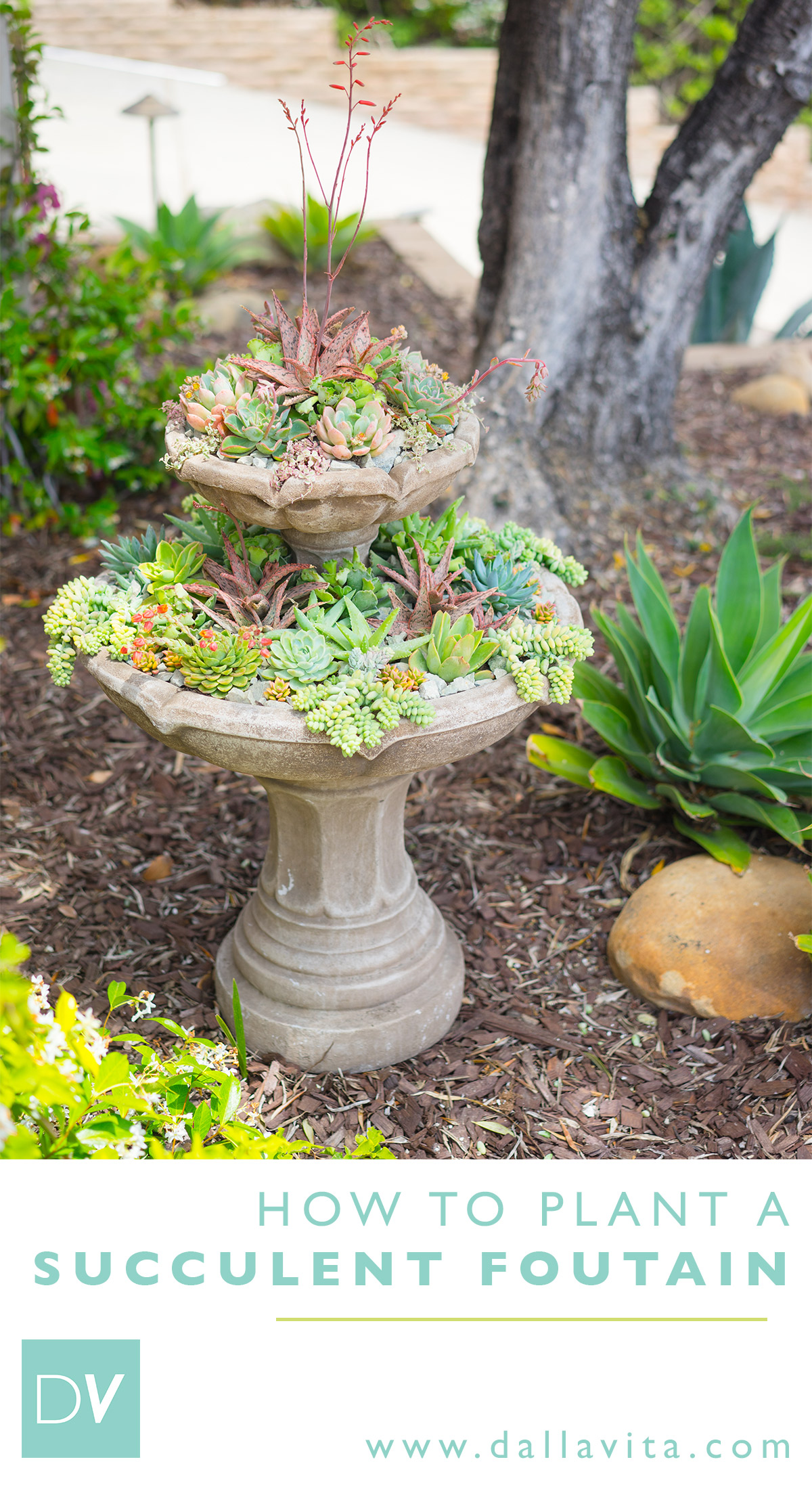 How to Plant a Succulent Fountain - Dalla Vita