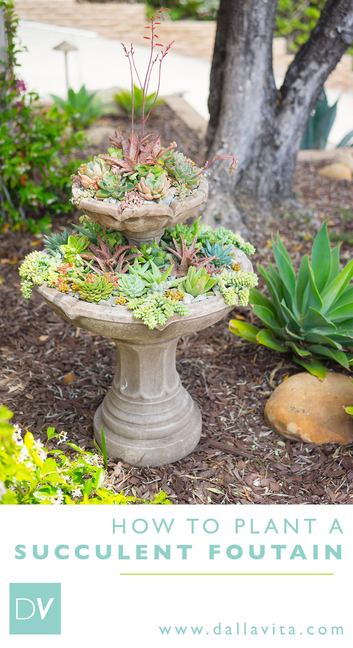 How to Plant a Succulent Fountain - Dalla Vita