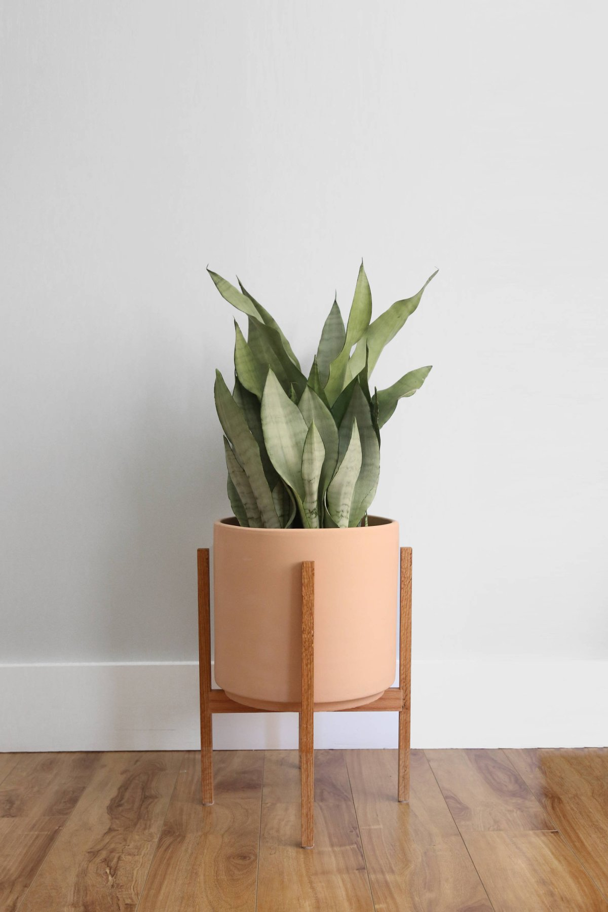 Light Pink Terra Cotta Pot and Stand