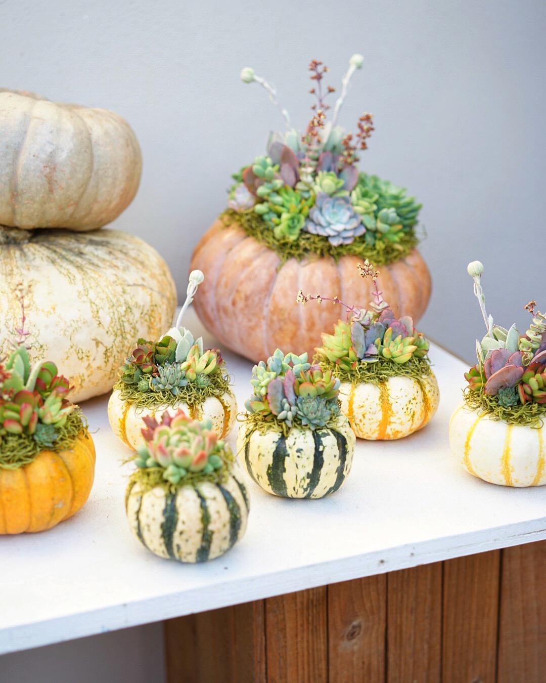 Succulent Topped Pumpkins