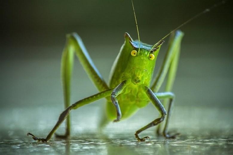 Social Media 101: Followers don't want to hear crickets. Engage on social media! | DAllisonLee.com