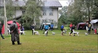 DalmatianDelights083NHEriksen