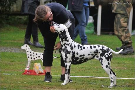DalmatianDelights156NHEriksen