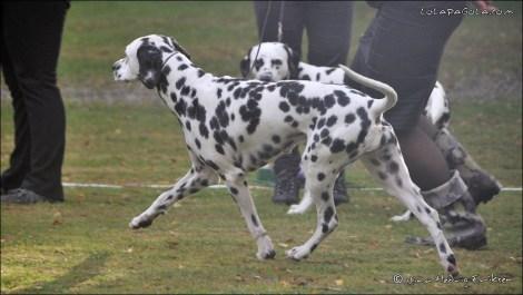 DalmatianDelights158NHEriksen