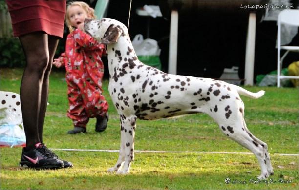 DalmatianDelights174NHEriksen