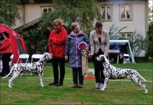 Show 101 - Dalmatian Delights 2015