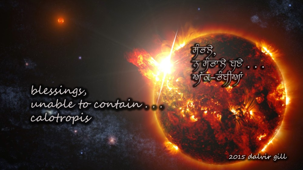 Apple of Sodom ( ਅੱਕ-ਭੰਬੀਆਂ )