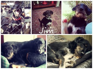 Collage of Jims pictures.