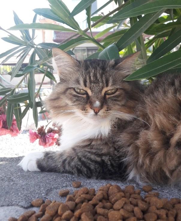 dalyan street cat no 1