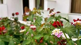 best-hotel-in-dalyan-riverside-hotel-dalyan-31