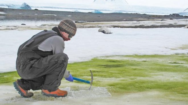 Nieve verde Antártida