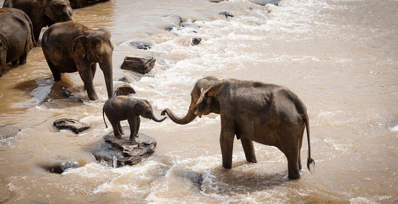 primer hospital elefantes 2 - India abre su primer hospital para elefantes