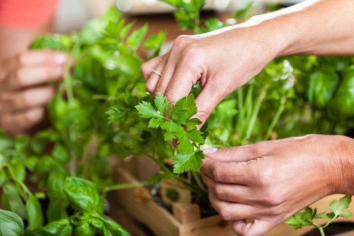 The Power of Green Food - Parsley