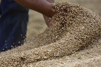 """السورية للحبوب تطرح مناقصة لاستيراد ٢٠٠ ألف طن من القمح """"الروسي"""""""