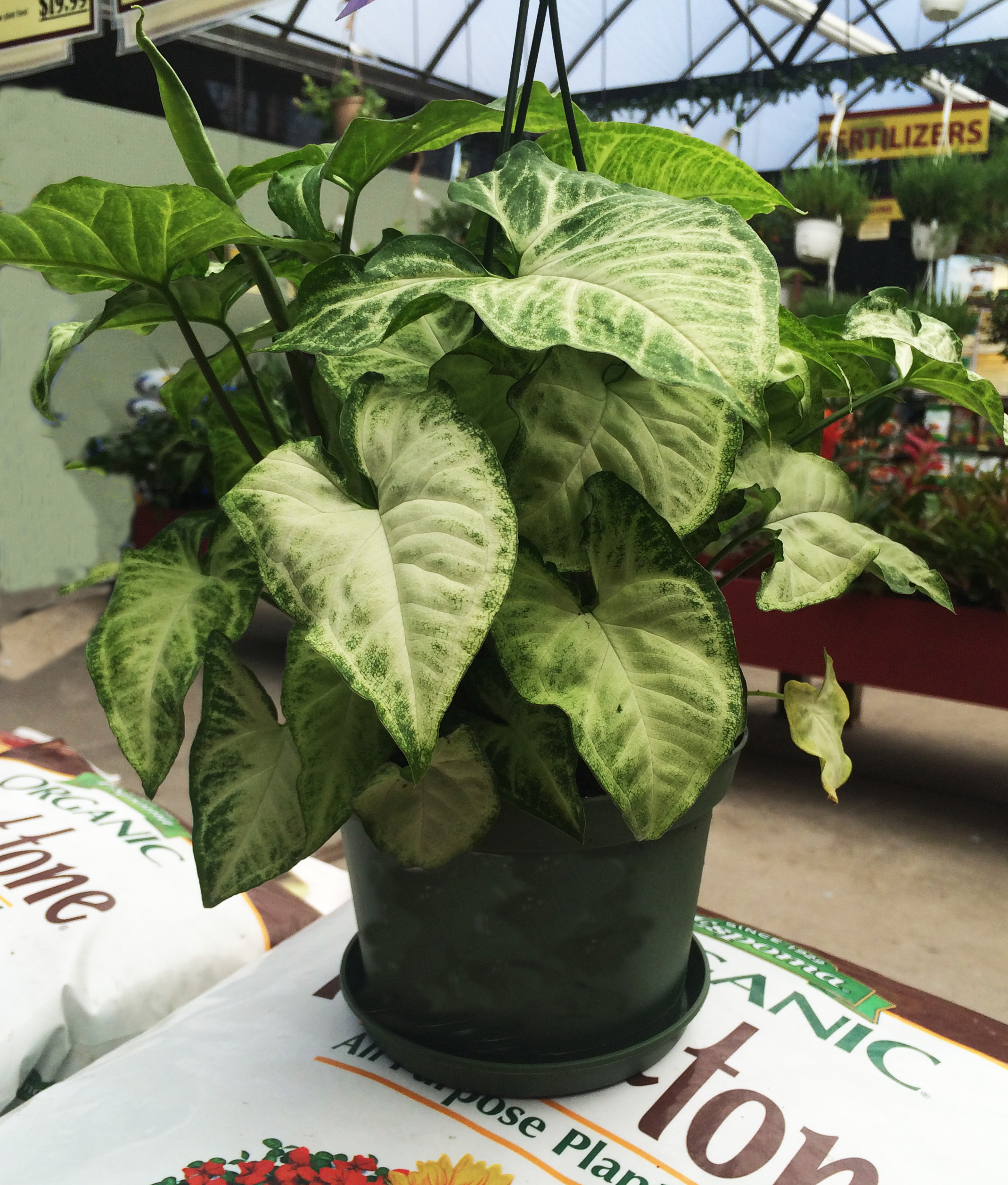 Perfect Indoor Plants for Your Home - Dambly\'s Garden Center