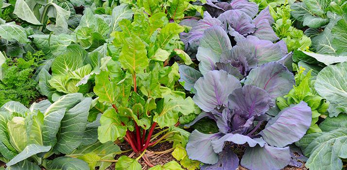 Cool-Season-Vegetables