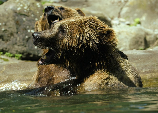 bear-371350_640