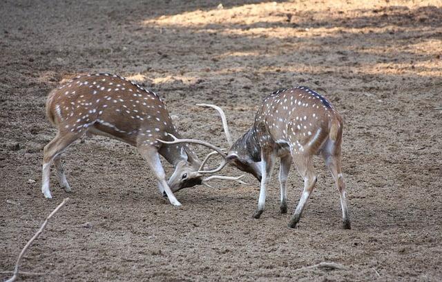deers-88989_640