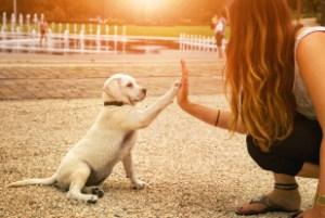 handshake avec un chiot