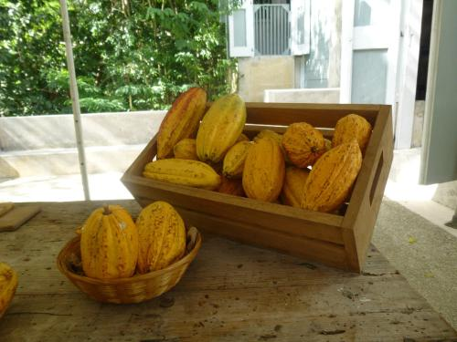 puerto rico ponce cacao pods in a box